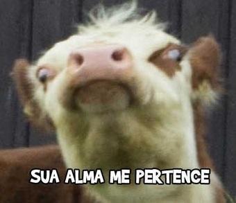 Olha para cara dessa cabra e veja se você não ri - meme