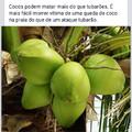 Fujam dos cocos !