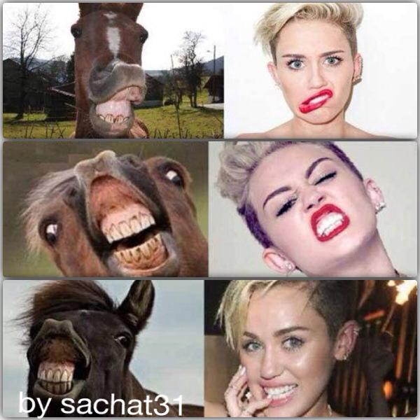 Ceci est une insulte au chevaux - meme