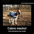Cabra macho