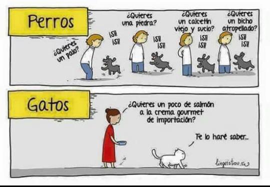 Perros vs Gatos - meme