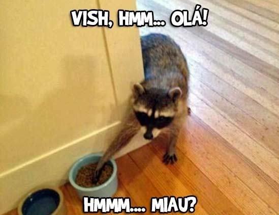 mae tem um cao na comida do gato... n pera - meme