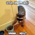 mae tem um cao na comida do gato... n pera