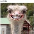 varios sorrisos kk
