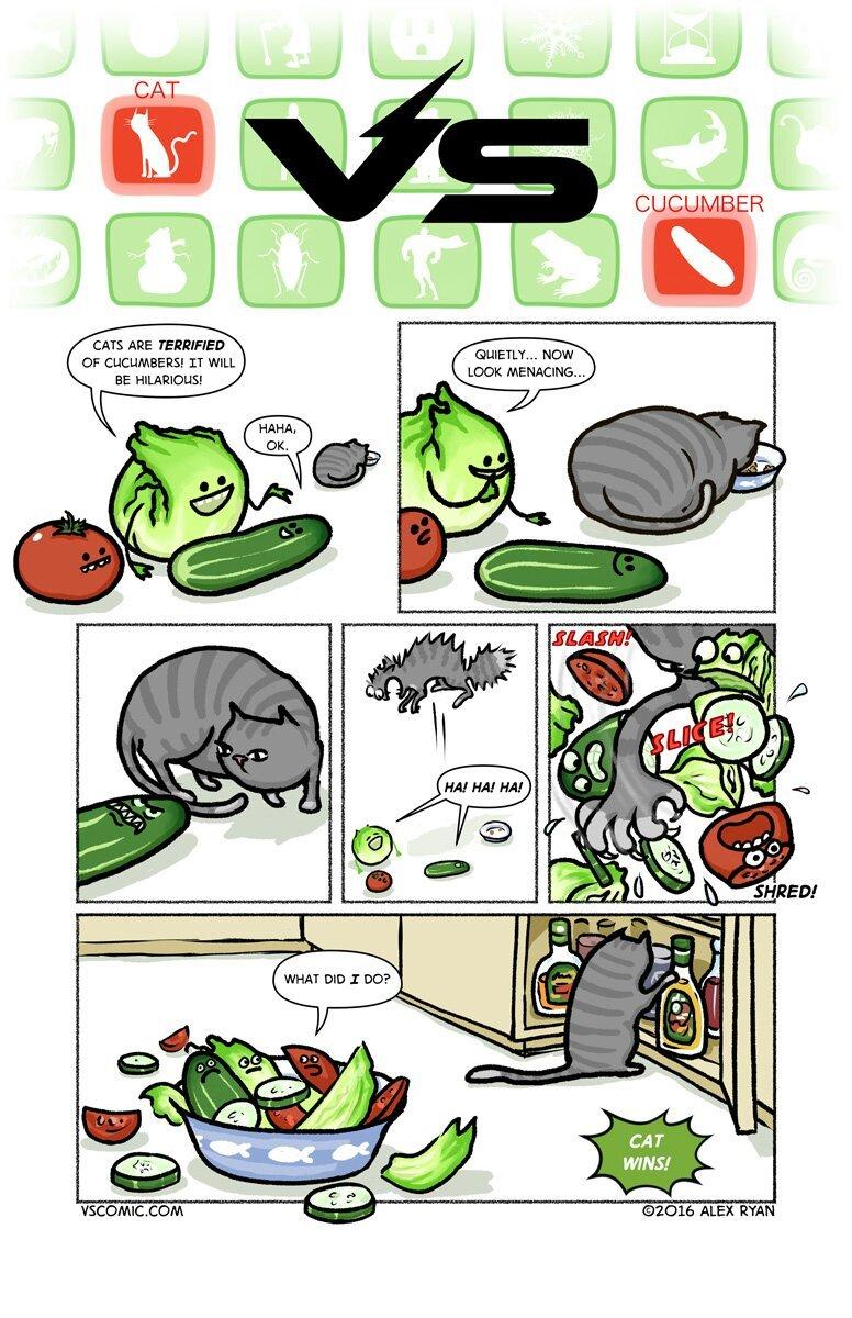 Cat vs pickle - meme