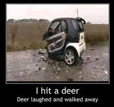 Deer vs smart car - meme