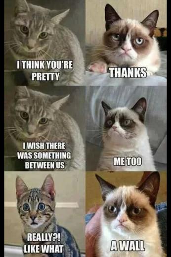 Cats are like me - meme