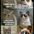 Cats are like me