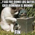 Los gatos nos dominaran! D:!