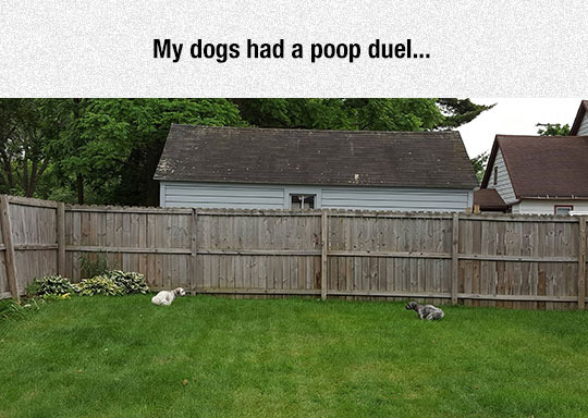 Lets duel ! Wow such duel ! Much poop ! - meme