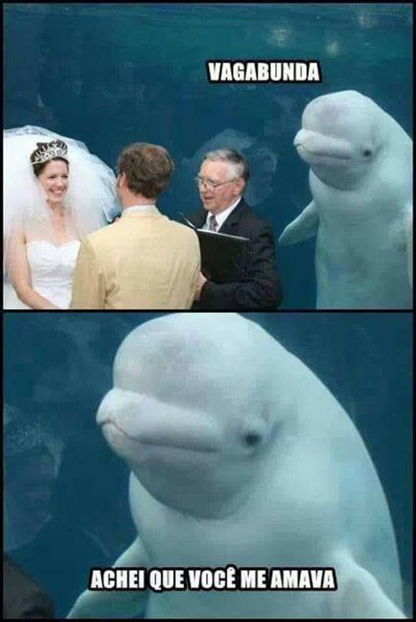 A vingança do golfinho está por vir... - meme