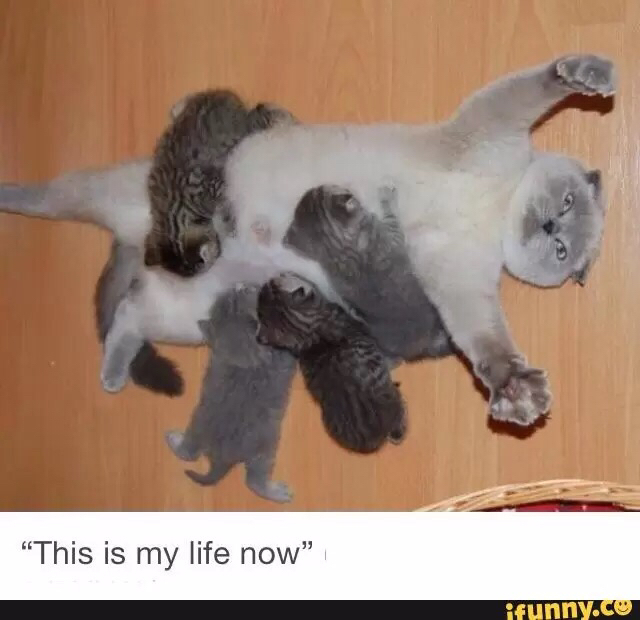 Here kitty kitty - meme
