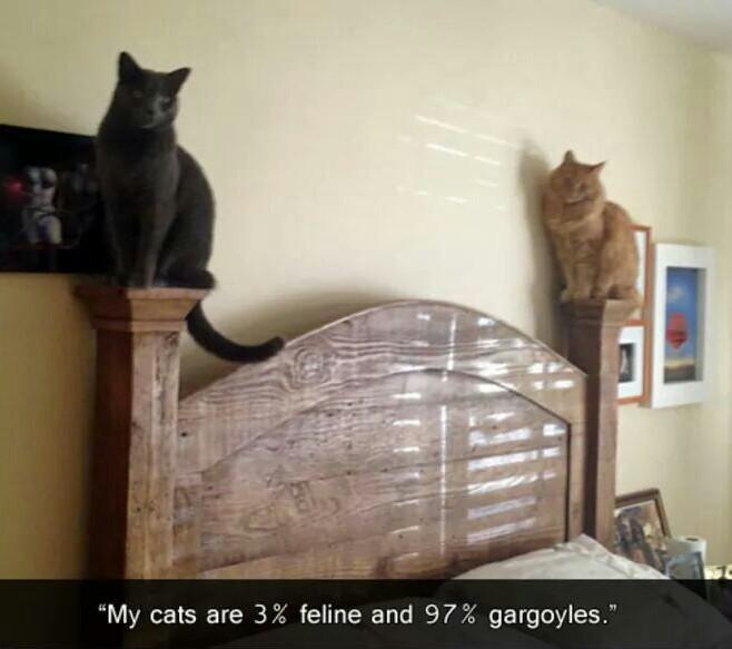 Feline Gargoyles the new fad - meme