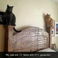 Feline Gargoyles the new fad
