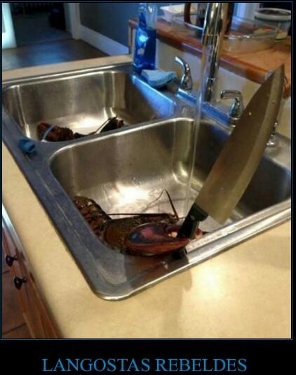 Ese momento en el que la langosta te intenta cocinar a ti - meme