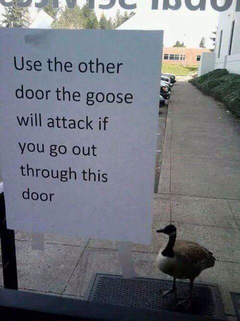 Damn geese ( ͡° ͜ʖ ͡°) - meme