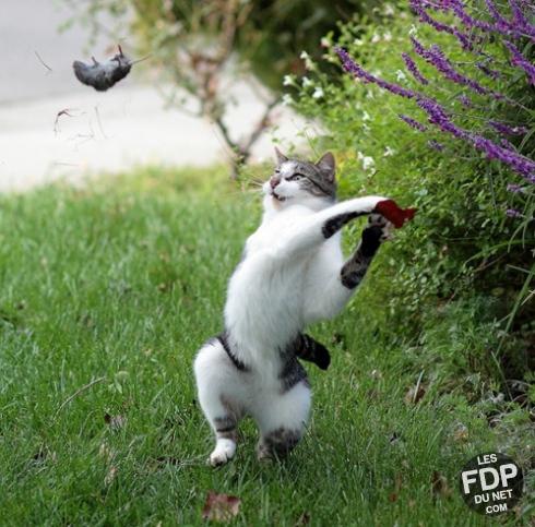Le chat le gors FDP de toute l, histoire animalière - meme