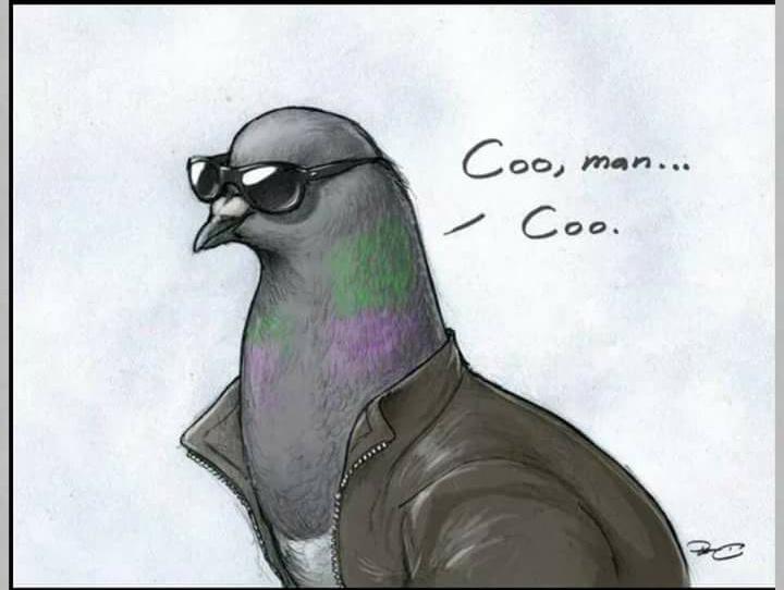 Pigeons :) - meme