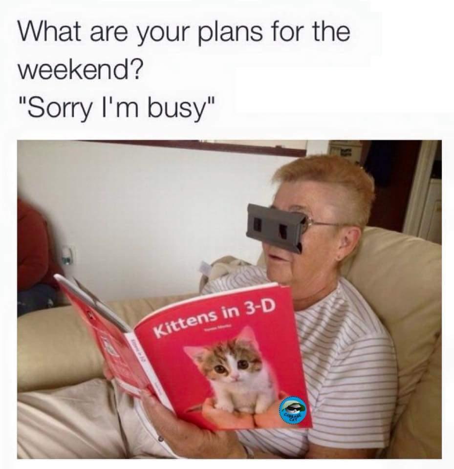 5615e7c28b45d cat lady life meme by allyovaries420 ) memedroid