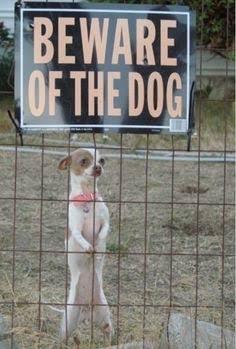 Beware of the dog - meme