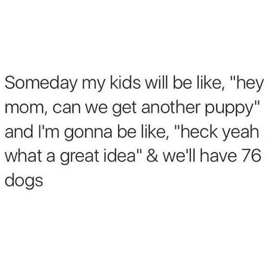 I will have a zoo :likeasir: - meme