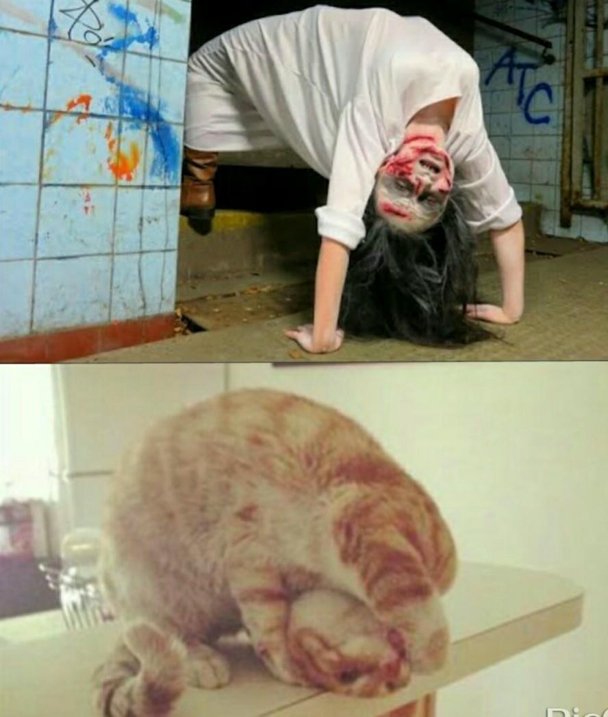 gato de satã - meme