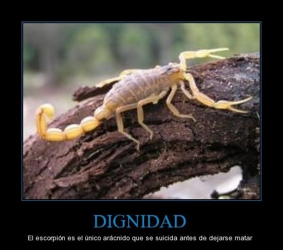 Dignidad - meme