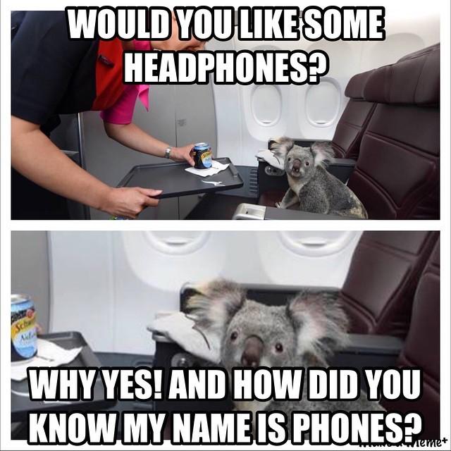 Head the Koala - meme