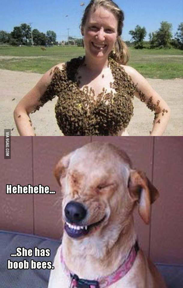 Dem bees - meme