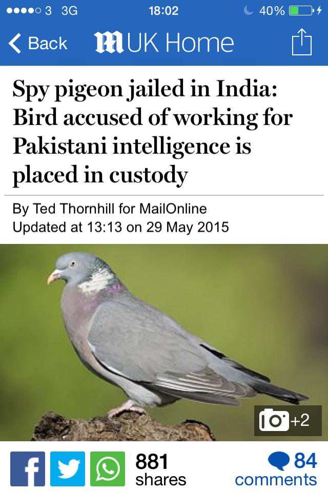 Damn pigeons - meme