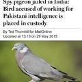 Damn pigeons