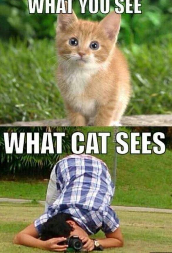 Sa passion ?! Prends des chats en photo dans des postures bizarre. - meme