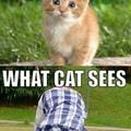 Sa passion ?! Prends des chats en photo dans des postures bizarre.