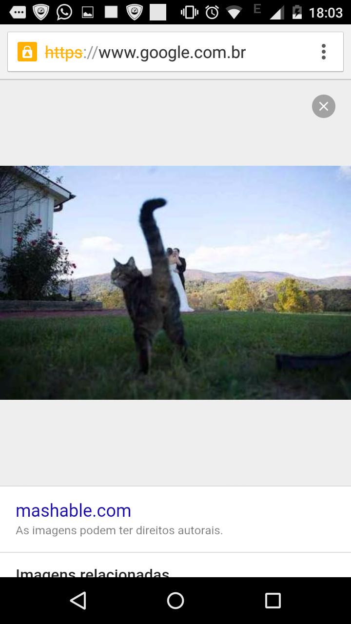 Gatos sendo gatos - meme