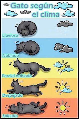 Meteorología gatuna - meme