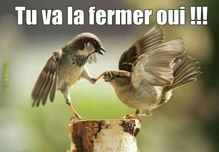 Piou Piou Pi... - meme