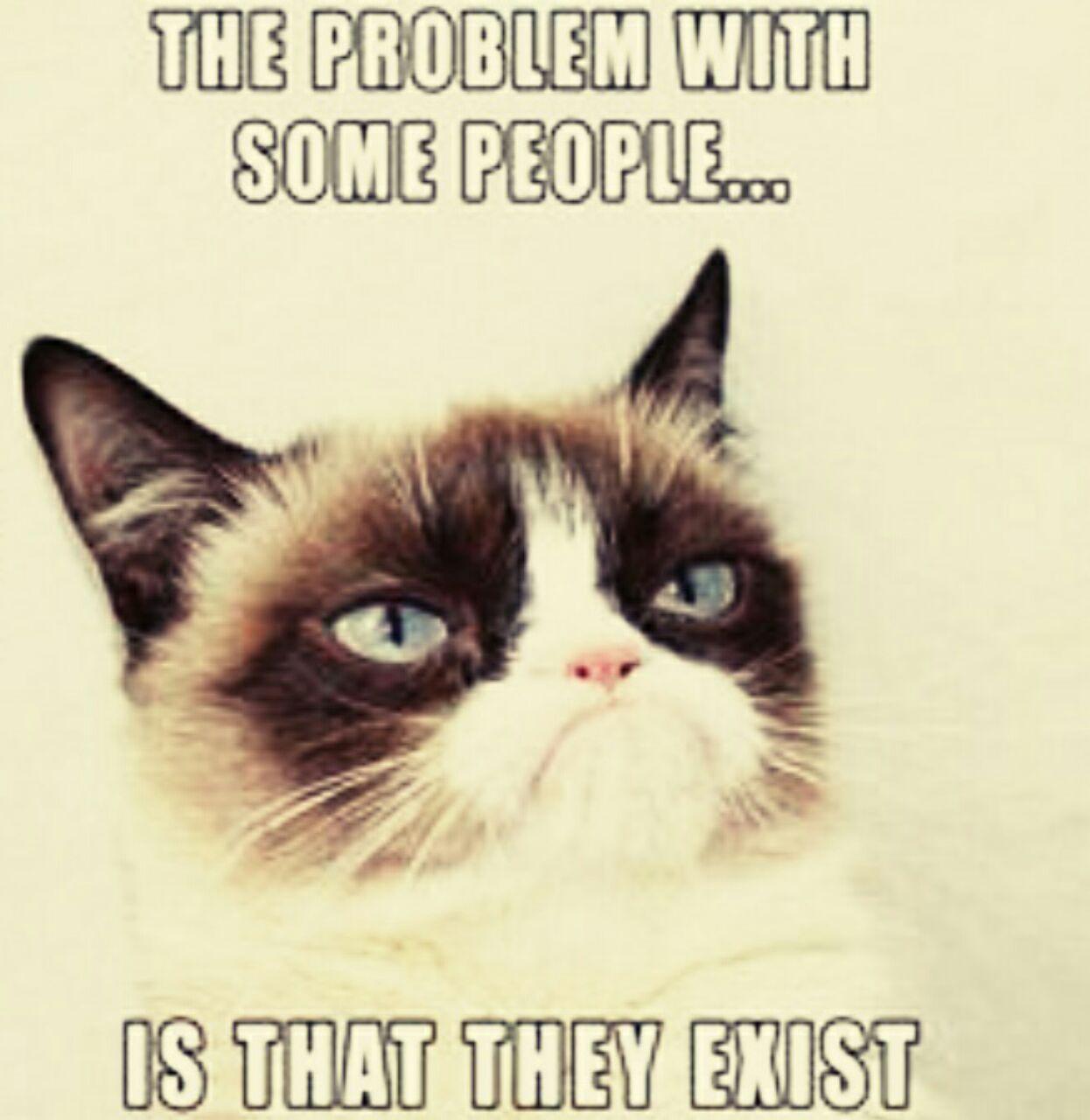 Grumpy Cat, la voix de la raison - meme