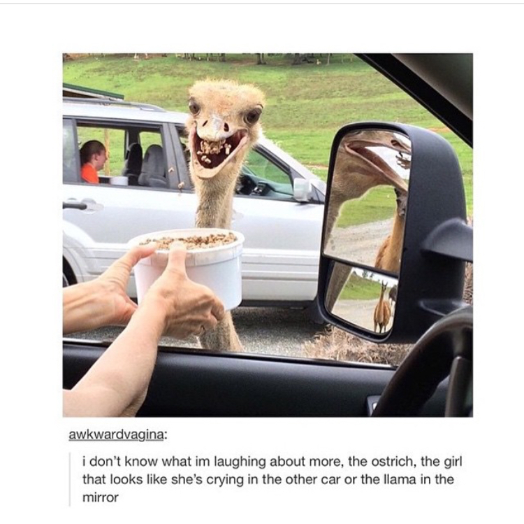 Ostrich looks like this title - meme
