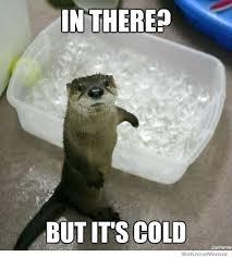 Otter! - meme