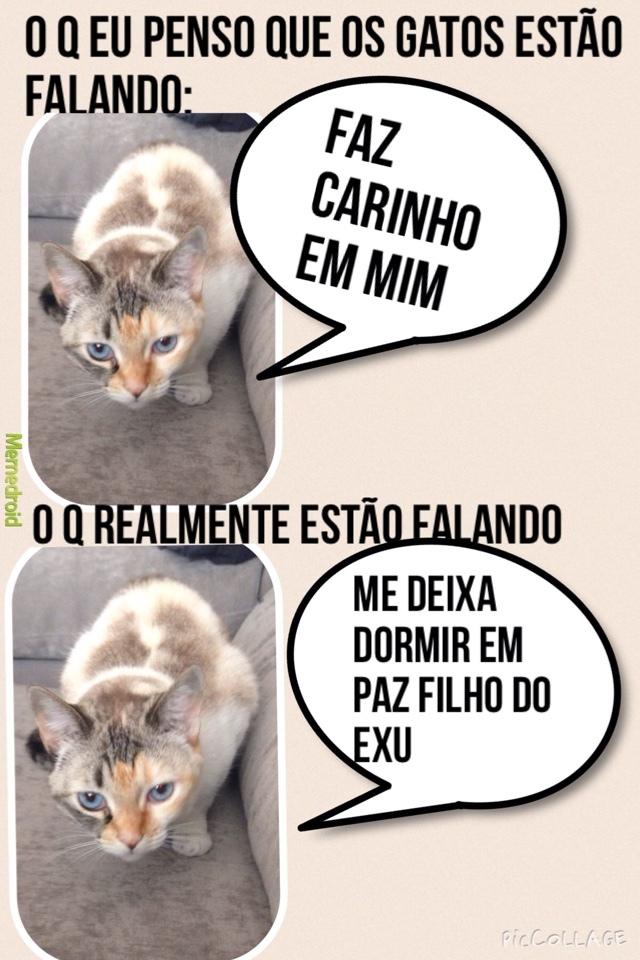 malditos gatos - meme