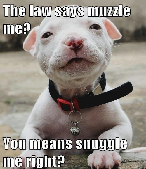 The best pitbull dog memes :) Memedroid