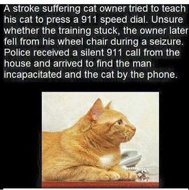 I love cats - meme