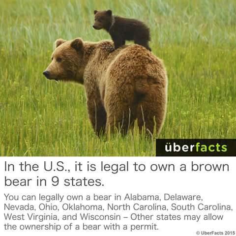 I WANNA OWN A BEAR! - meme
