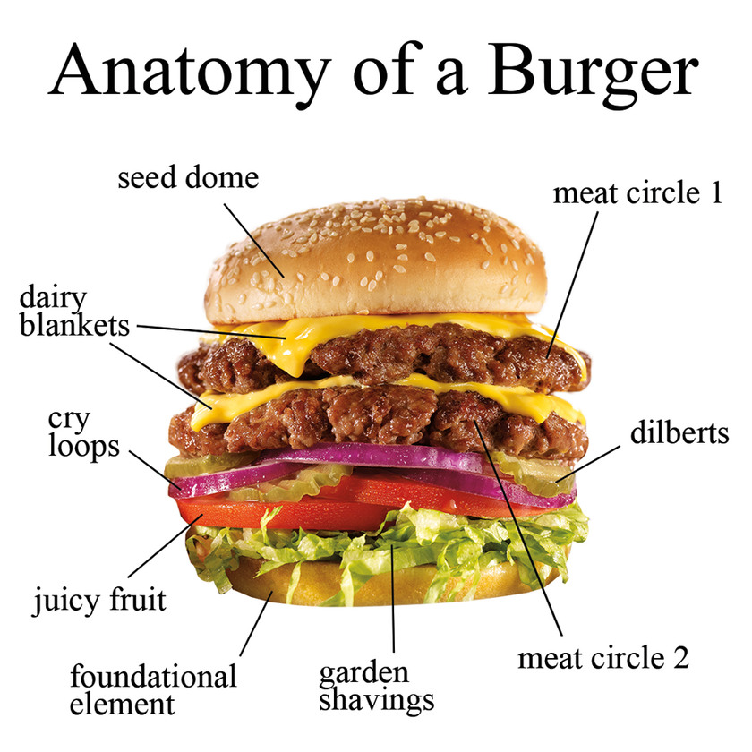 Burger Anatomy - meme