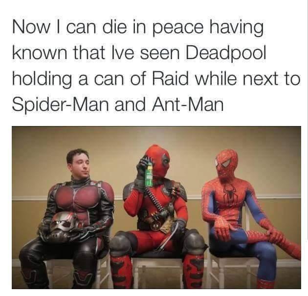 Kills bugs dead - meme