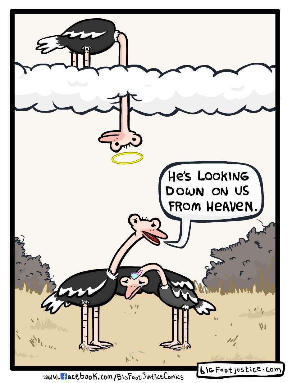 ostrich heaven - meme