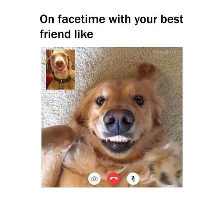 Look at that face of the other dog - meme