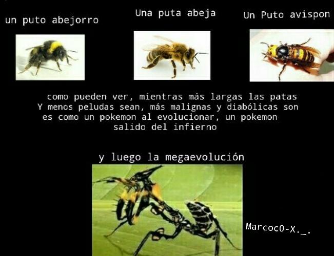 Pedazo de mega evolucion - meme