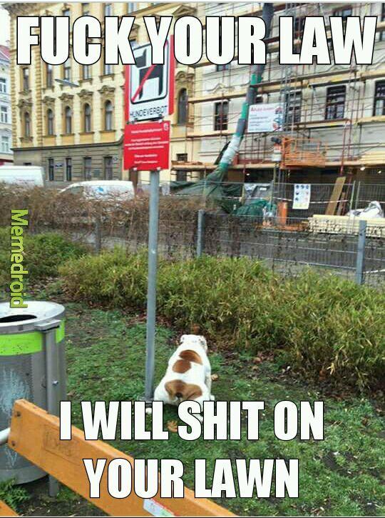 outlaw dog - meme