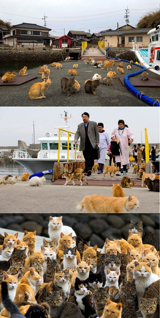 This is an island in japan which is occupied by cats - meme
